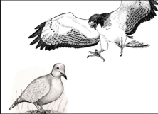 hawks_and_doves_-_Google_Search