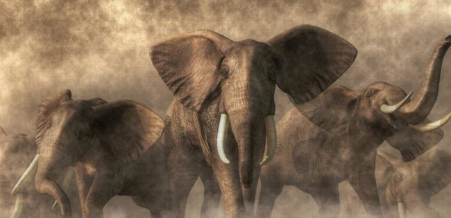 stampeding_elephants_-_Google_Search